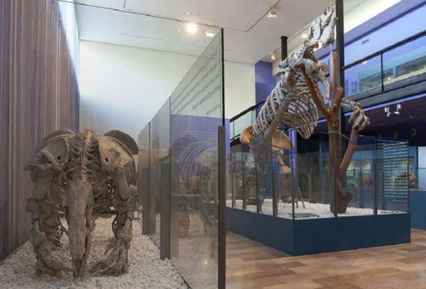 Museo de Ciencias Naturales (Valencia)