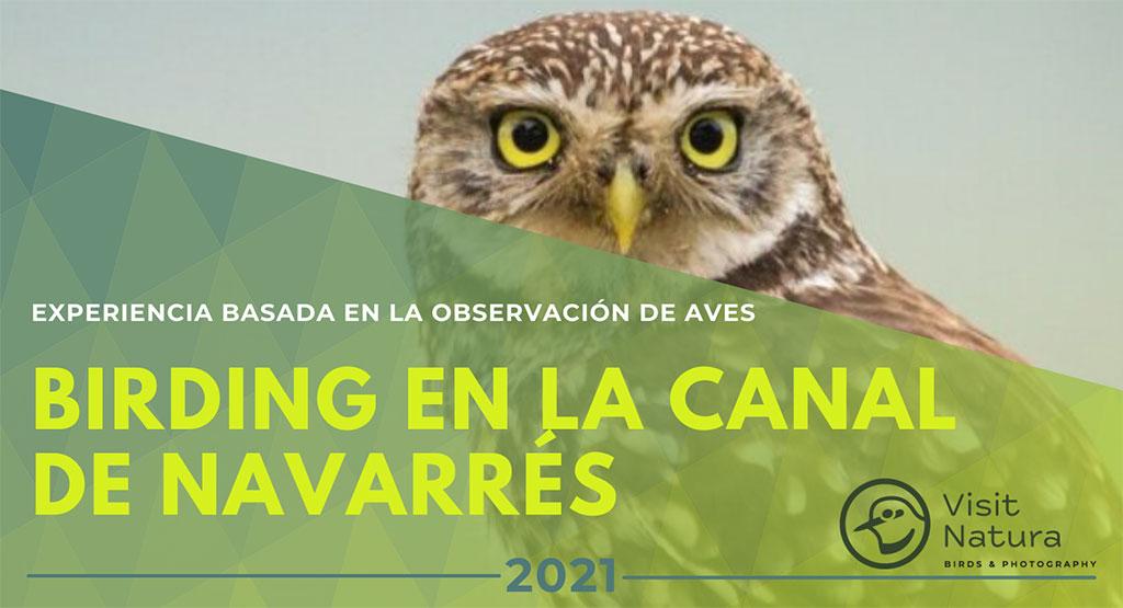 Birding en la Canal de Navarrés 2021